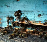 O medu vpěti bodech